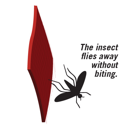 The Insect Flies Away Without Biting